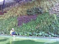 Vertical Garden Graha Family P-109 Surabaya